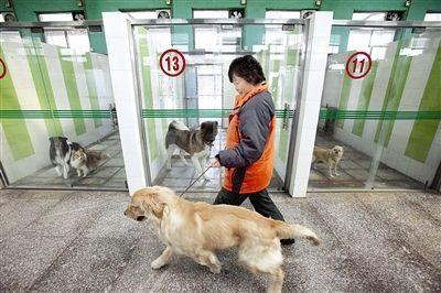 小众项目-宠物寄养,新手都能轻松月入万元_小峰创业汇