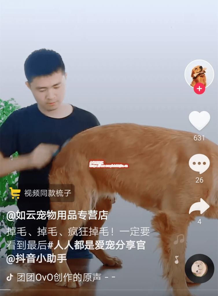 网赚项目:利用抖音操作宠物短视频,日入上千