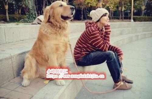 网赚项目:把狗当娃养?狗上学费用比人还高?